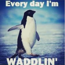 Penguin Waddle and Pregnancy Humor meme